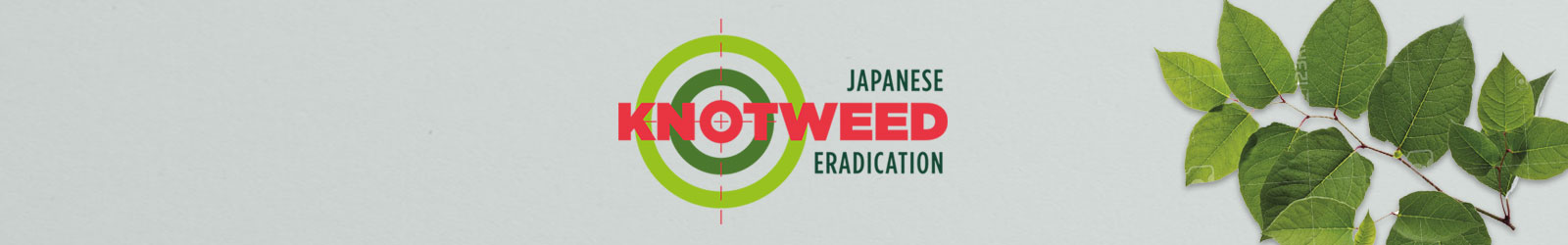 Japanese Knotweed Featured Image